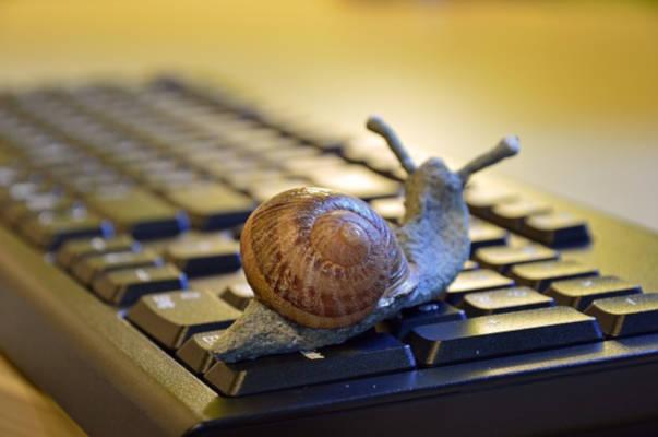 escargot sur clavier ordinateur